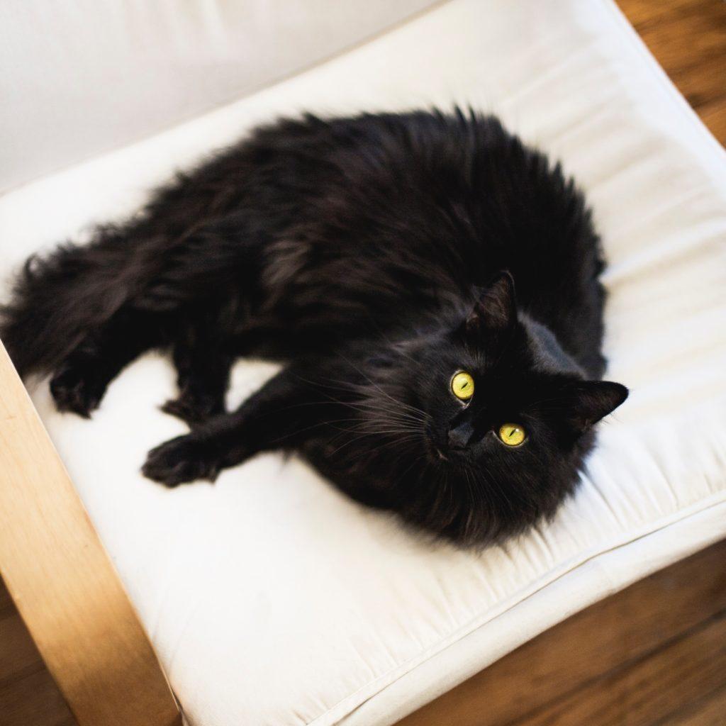 目を見開いた黒猫