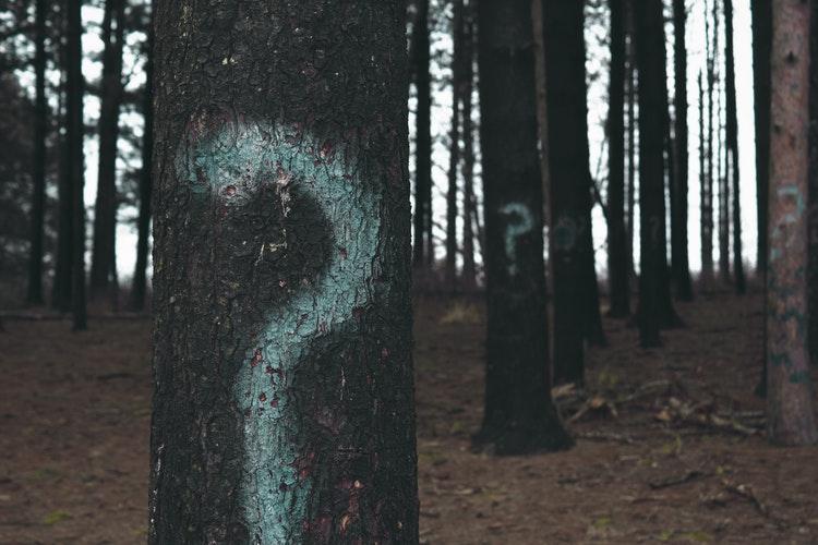 クエスチョンマークが書いてある木