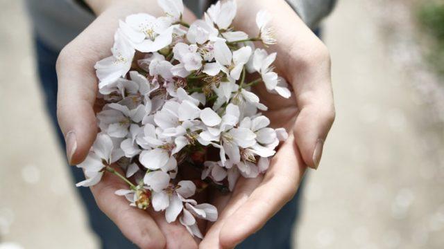 手にいっぱいの桜の花びらを持っている女性