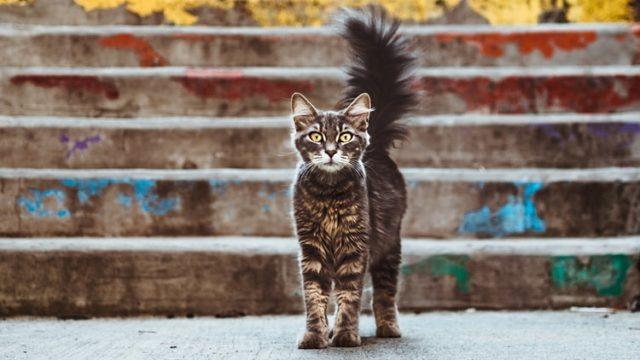 警戒した様子を見せる猫