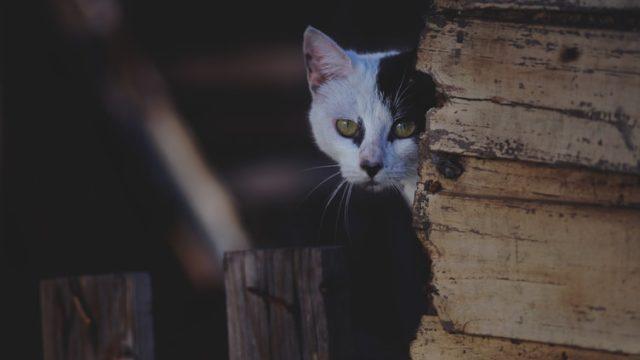 壁から様子をうかがう猫